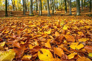 Herfstbladeren in beukenbos van Fokko Erhart