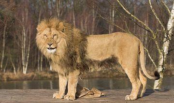 leeuw van anja voorn