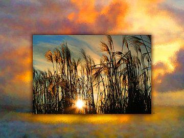 Coucher de soleil dans les joncs au bord du lac sur Dirk H. Wendt