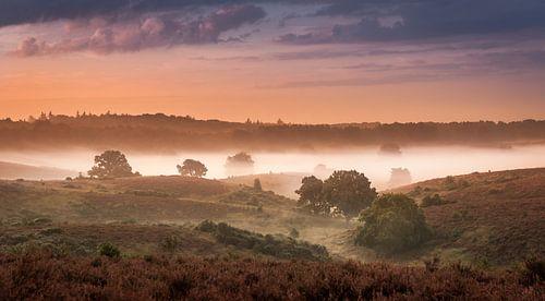 Landschap in de mist van Alexander Cox