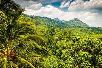 Landschap regenwoud met palmbomen en bergen in Sri Lanka van Dieter Walther