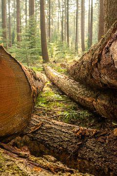 Doorkijkje tussen de boomstammen, Speulderbos, Veluwe van Paul van Putten