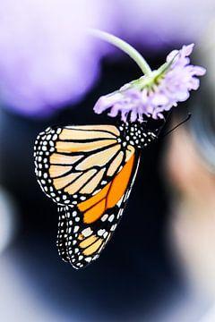 Monarch butterfly von Mark Zanderink