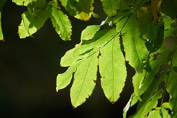 Groene bladeren in de zon