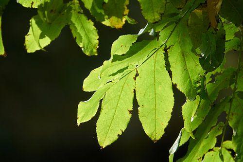 Groene bladeren in de zon  van