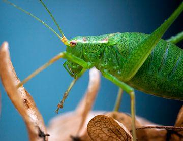 Little green monster van Nildo Scoop