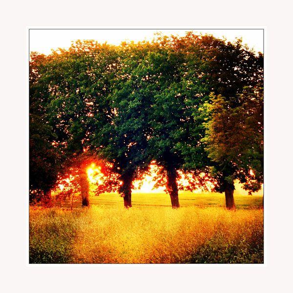 Trees on fire  van Pim Feijen