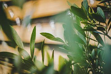 Voorjaarsgroen in de tuin van Daphne Groeneveld