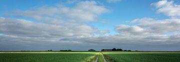 Felder mit Zwiebeln in Groningen, Niederlande von Bo Scheeringa Photography