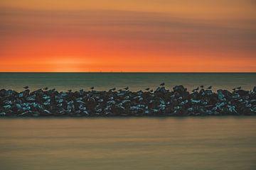 Vögel bei Sonnenuntergang von Gwenn klabbers