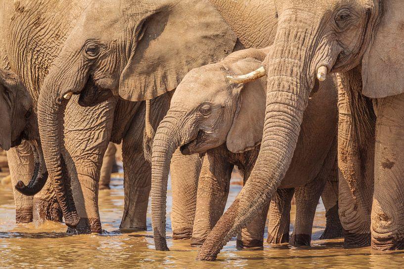 Kudde Afrikaanse Olifanten bij drinkpoel van Chris Stenger