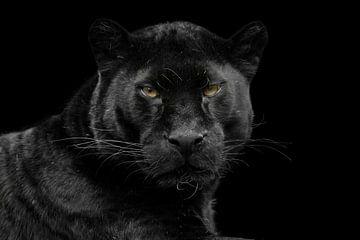 black leopard von gea strucks