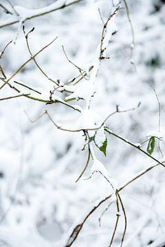 Winterwald in einer weißen Landschaft mit Schnee bedeckt | Fine Art Photo Print von Karijn Seldam