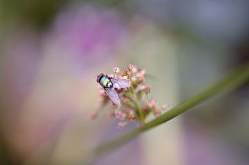 Feminine Fliege von Pink Rose Pictures