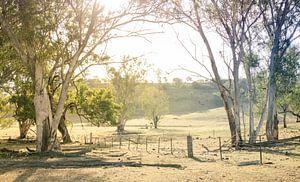 Op de boerderij in Garrawilla, Australië van Sven Wildschut