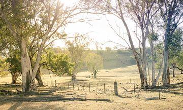 Auf dem Bauernhof in Garrawilla, Australien von Sven Wildschut