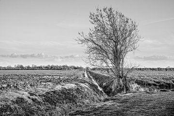 Tree sur Wessel Krul