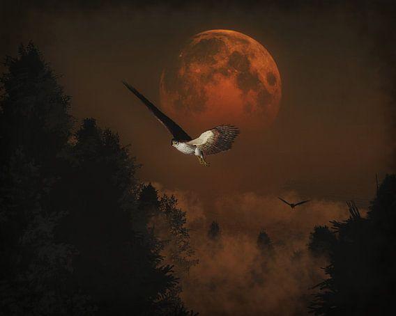 Valken jagen in de avond