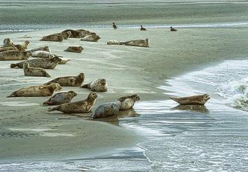 Dichtungen auf Sandbank von Marcel van Balken