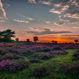 Heidevelden van Hilversum van Robin Pics