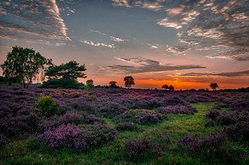 Heidevelden van Hilversum van Robin Pics (verliefd op Utrecht)