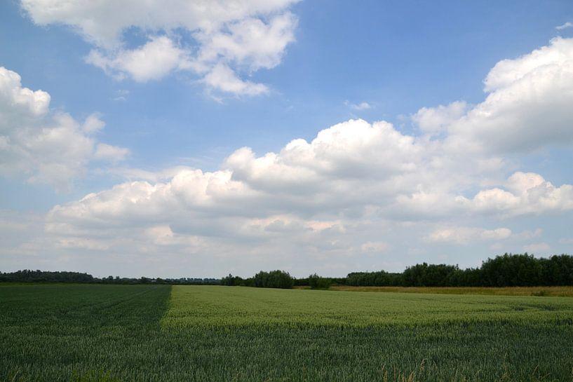 Roggeveld van Johan Hesselbach