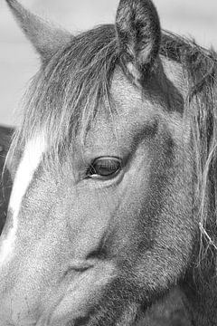 Zwart wit close up van paardenhoofd en oog