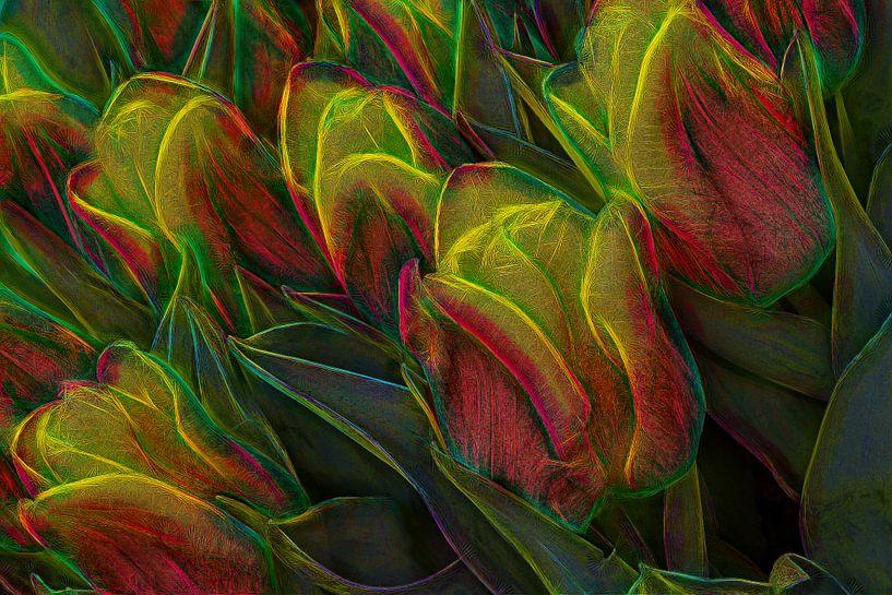 Abstracte tulpen van eric van der eijk