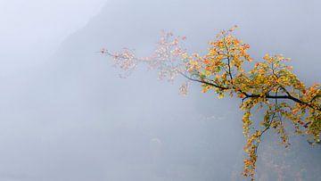 Boom in de mist van Thomas Heitz
