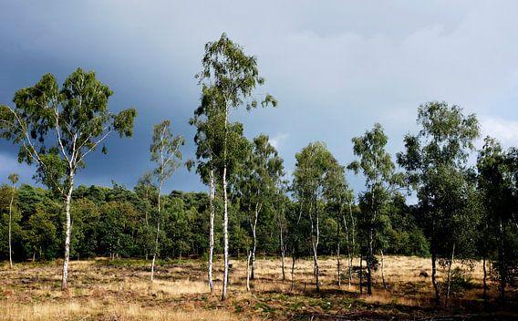 Amerongse Berg van Christiaan Krouwels