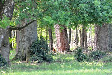 bos met fazanten van Petra De Jonge