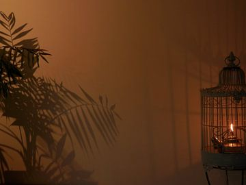 Interieur kaars schaduw plant vogelkooi vuur op canvas behang en