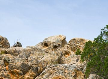 'Wachter van de bergen' van Erna Kampman
