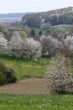 Limburgs voorjaarslandschap van Rob Hendriks