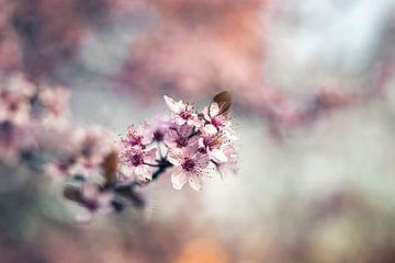 Retro-Blüten von Kristof Ven