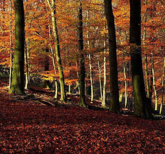 Herbst im Neandertal2