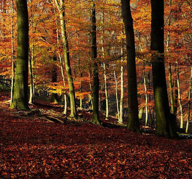Herbst im Neandertal2 van Iwona Sdunek alias ANOWI