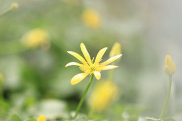 Frühlingsblumen von Fotografie Sybrandy