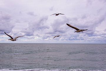 Zeemeeuwen in Vlucht.