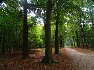 Lichtinval in het bos  van Sanne Compeer