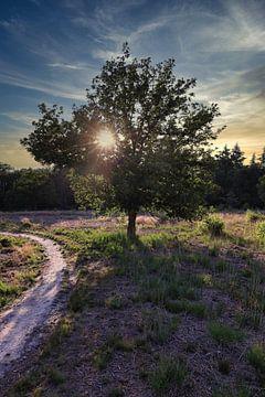Zonsondergang bos van Tineke Oving