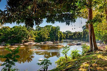 Blick auf den Fluss Surinam, oberhalb von Surinam von Marcel Bakker