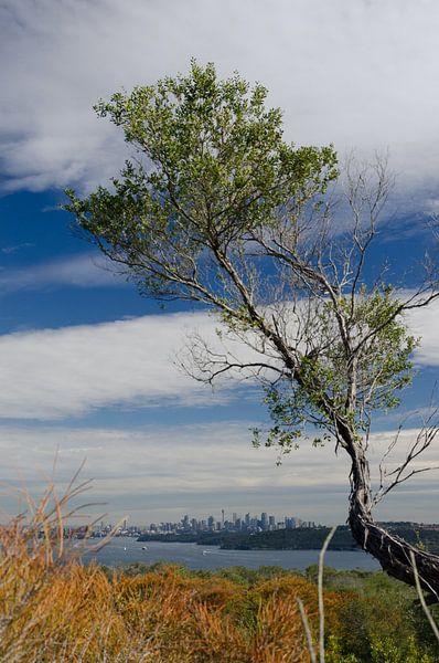 Uitzicht op Sydney van Sven Wildschut