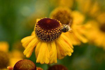 Die Blume und die Biene von Sabine Claus