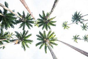 Palmbomen in de Botanische tuinen van Rio de Janeiro van Kaj Hendriks