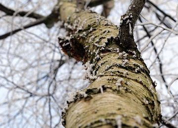 Boom in het bos van Corry Husada-Ghesquiere