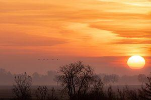 Lever de soleil avec les oies. sur Anita Lammersma