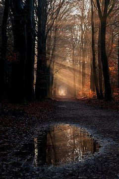 Herbst im Wald von Joost de Groot