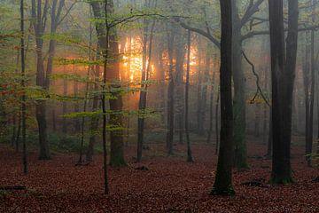 Sonnenaufgang von Mariëlle Weijsenfeld