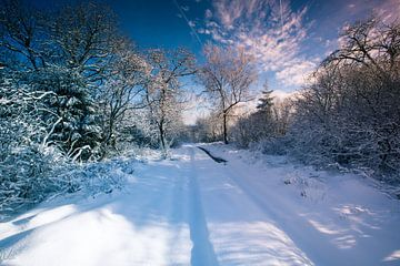 Sentier forestier enneigé sur Arjen Hartog